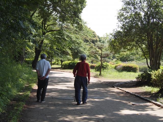 散歩の同伴